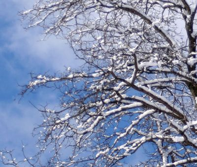 SnowyBranches.3-09