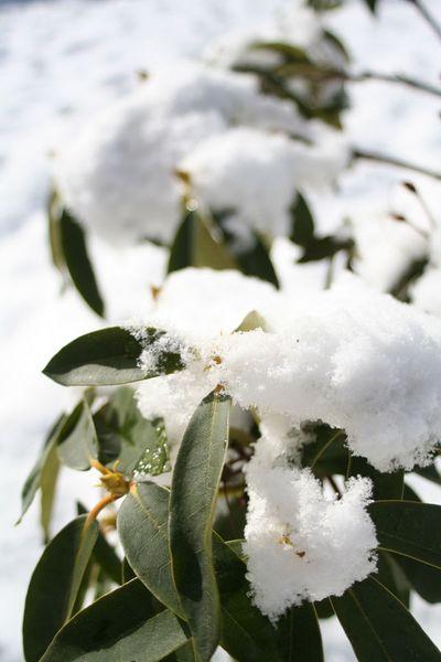 SnowyRhody.3-09