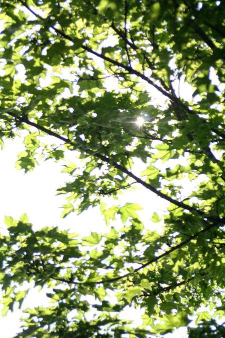 Sunandtree.5-09