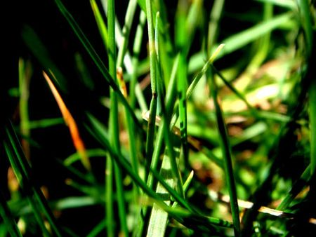 Greenfallgrass