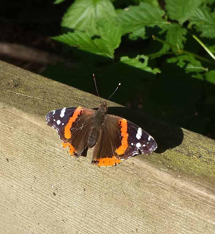 Butterflyinthesun-05-20-15