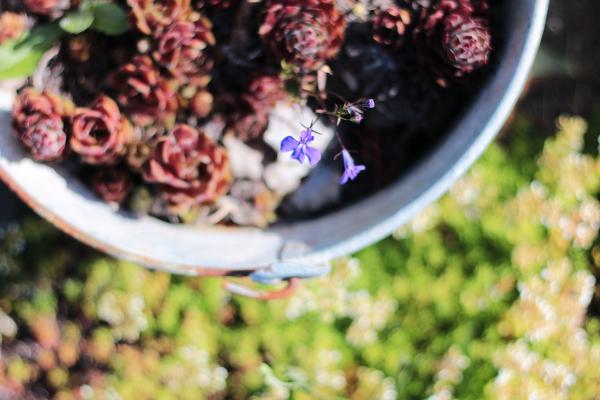 Succulent-bucket-June2018
