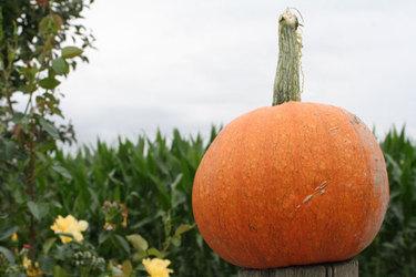 Pumpkinatcraven