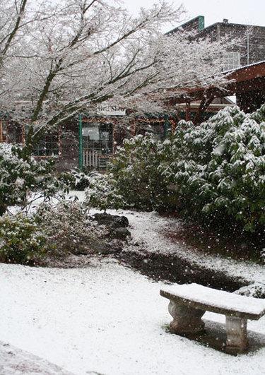 Snow41207