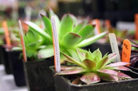 Plantshow