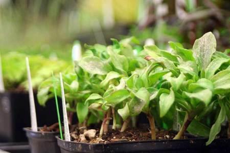 Plantshow2